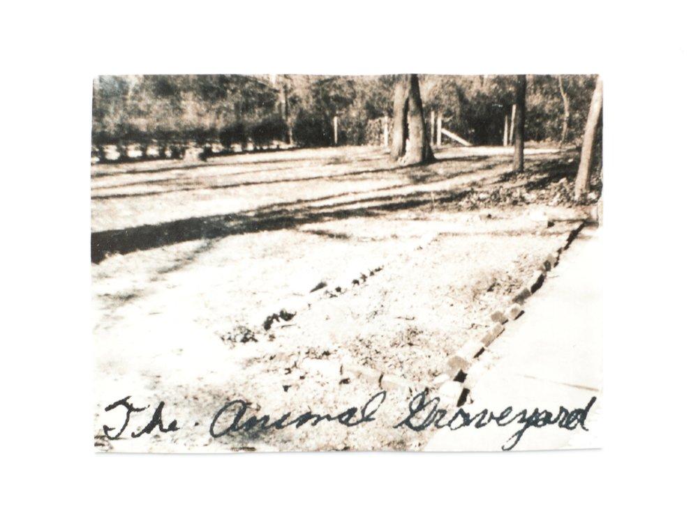 "The animal graveyard  1960s / 2015 Vintage print 2x2.25"""
