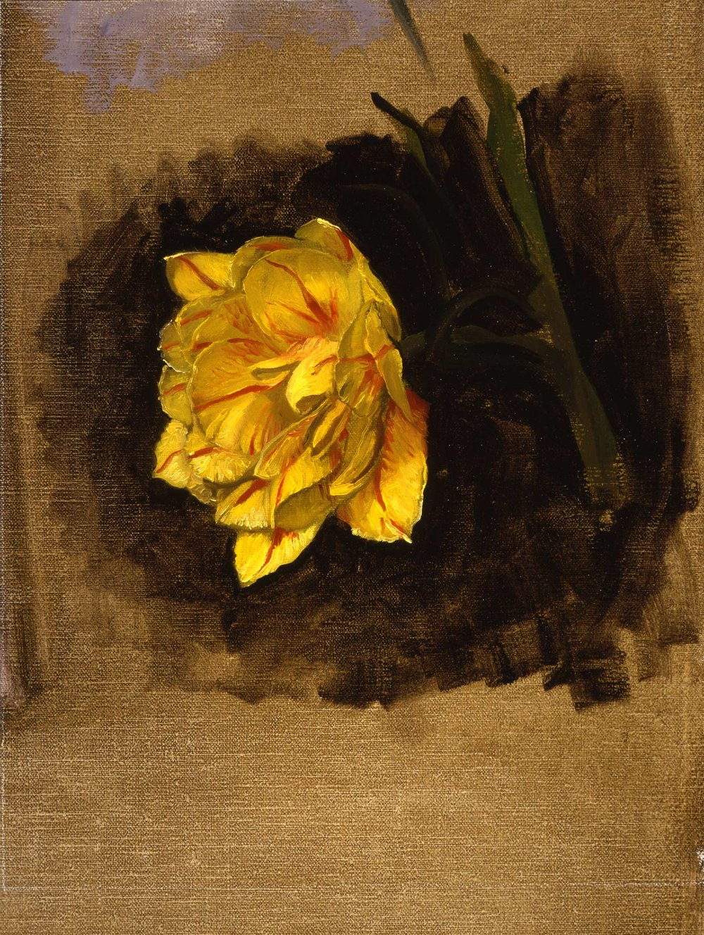 Study of a Double Tulip