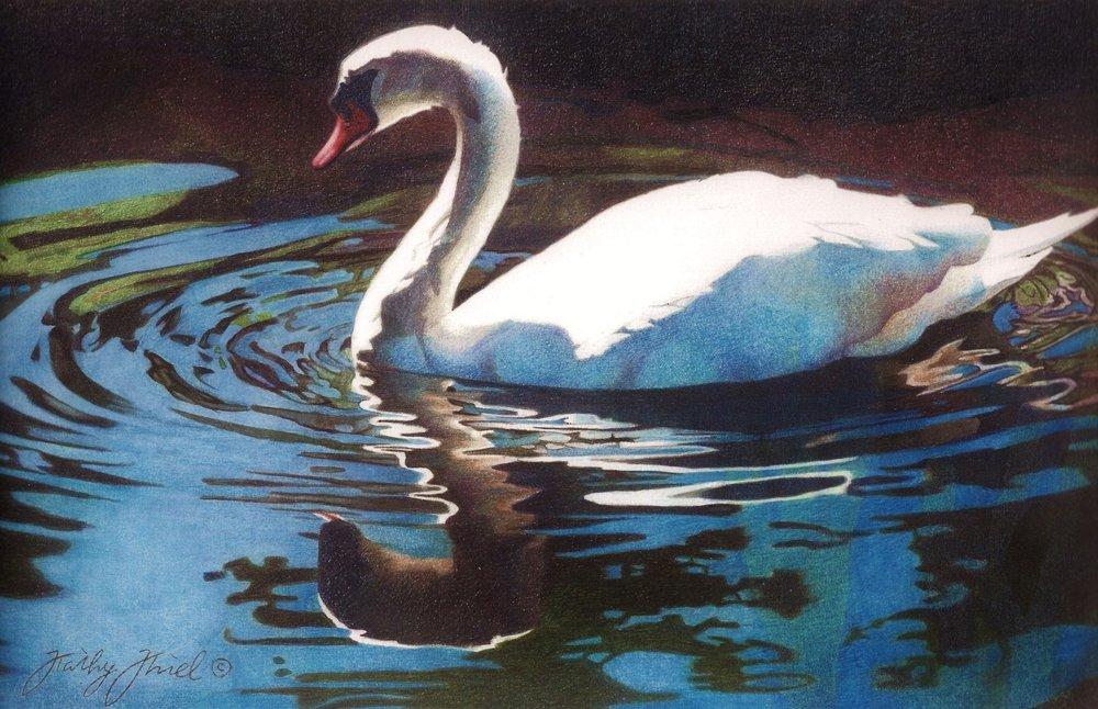 Backlit Swan - Backlit Swan is a 7.5