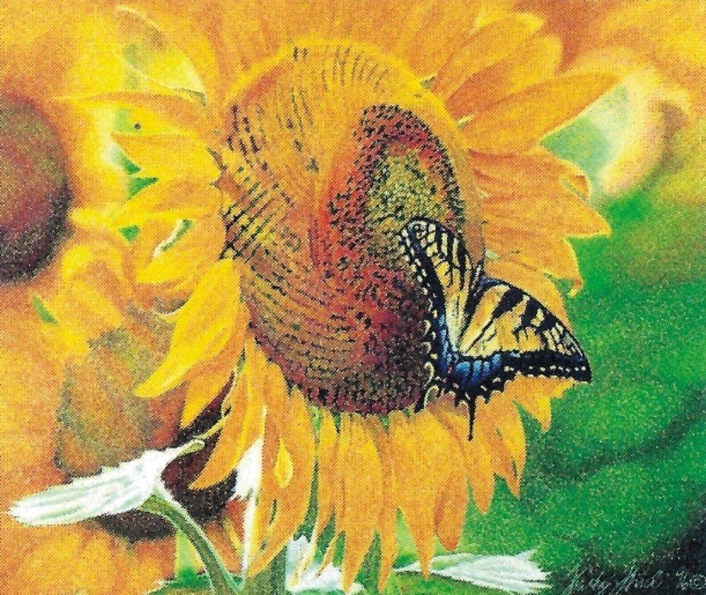 Sunflower & Butterfly.JPG