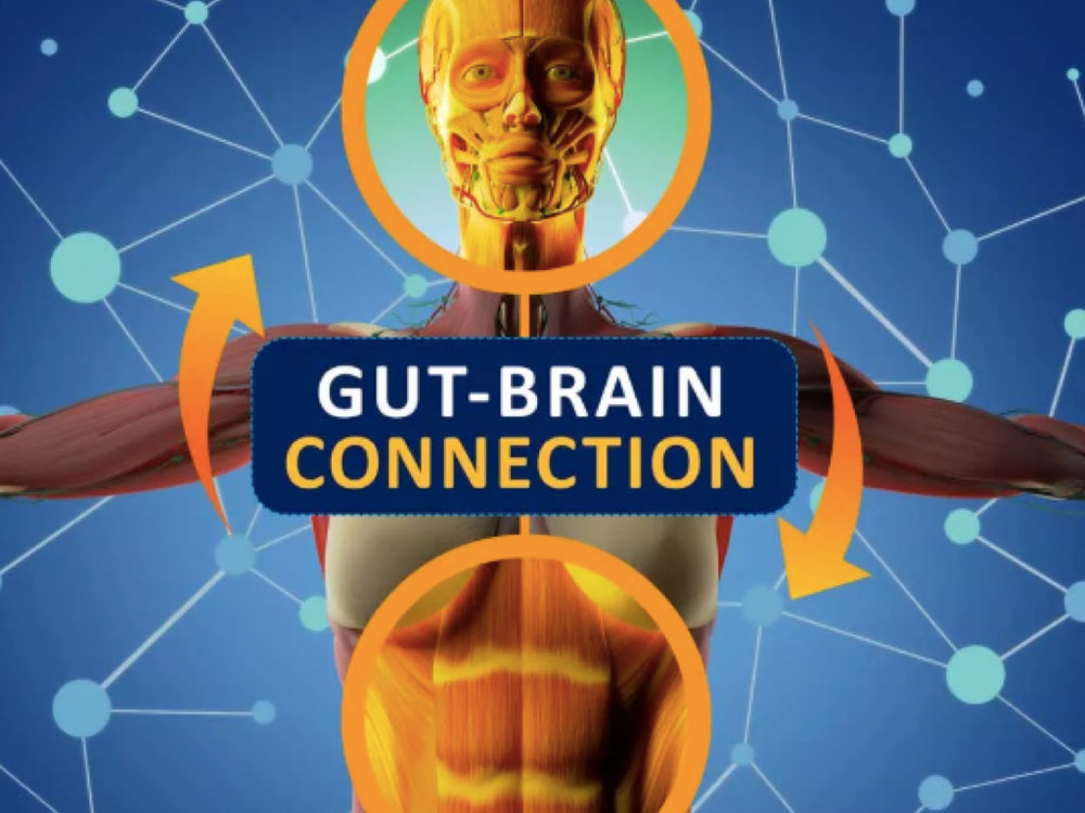 The Mind & Gut Connection -