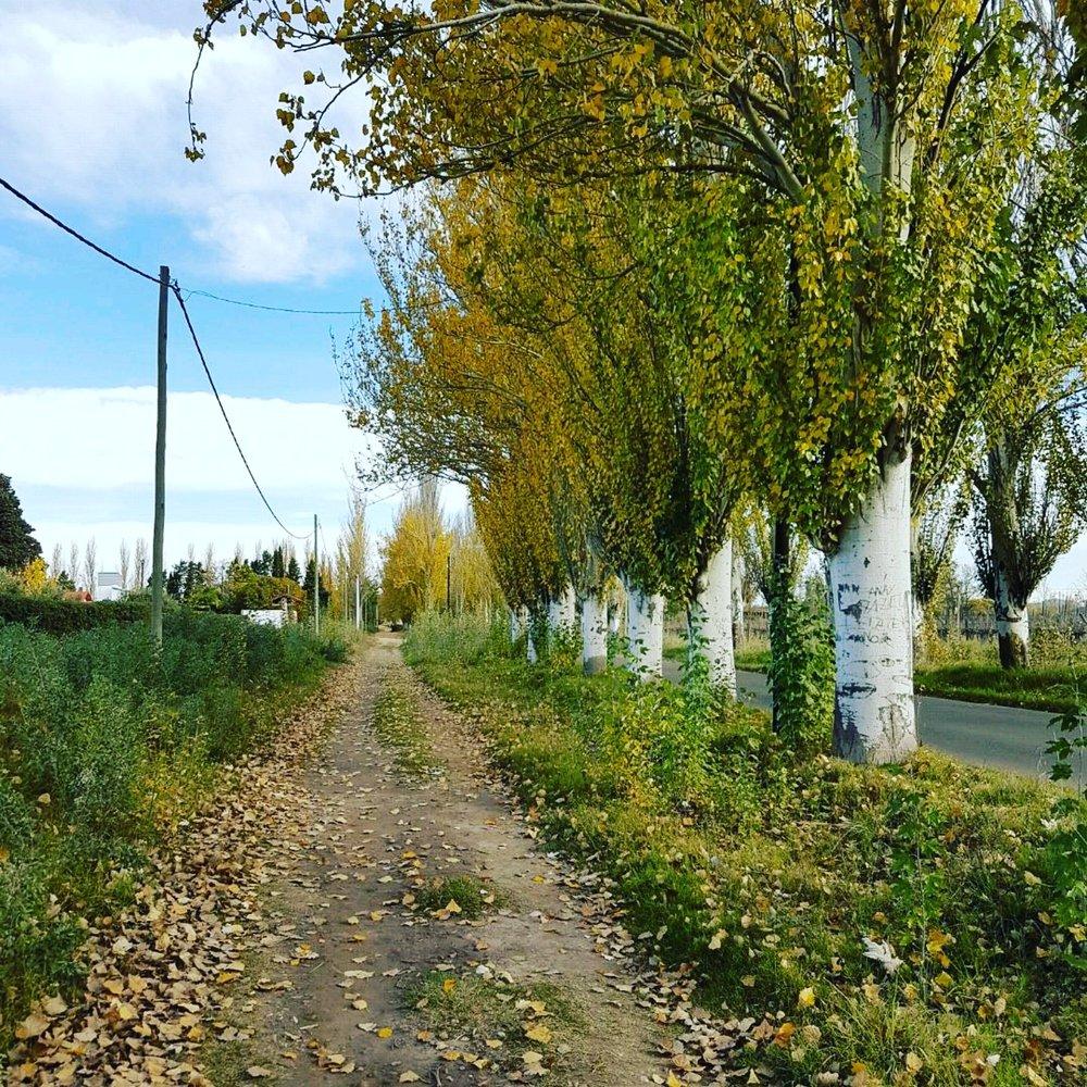 My town, San Rafael (Mendoza, Argentina)