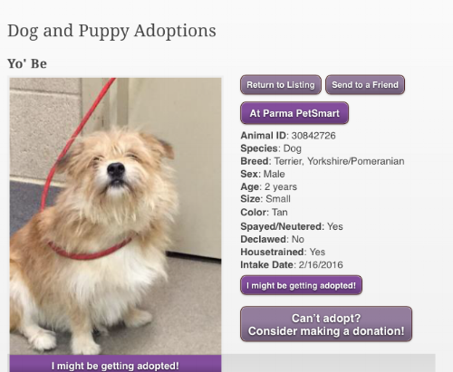 Yo'be's adoption post on the APL website