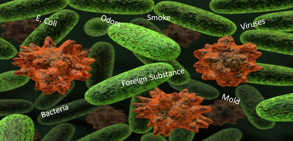 Viruses Bacteria Mold.png