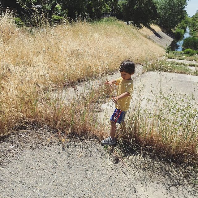 learning to slow down and to savor the parting of tall grass to get to the tadpoles with this guy. he's my greatest teacher. i can't help but wonder a lot what it must be like to be in his body and mind.
