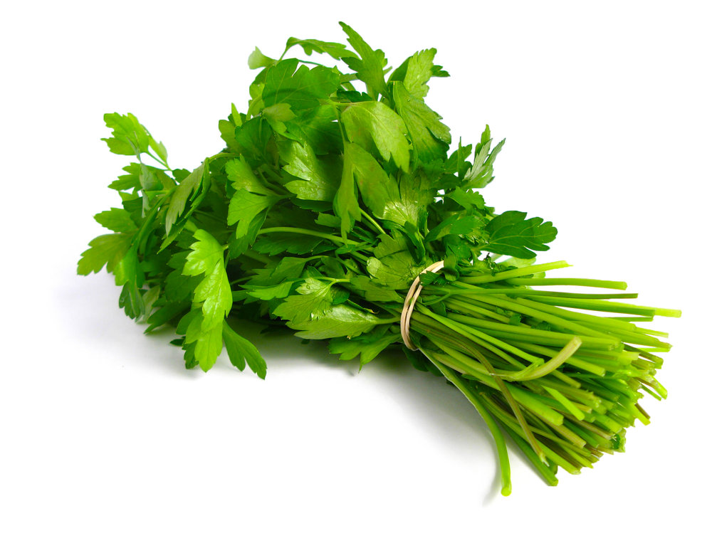 Coriandrum sativum. Koriander. Coriander. (Photo: Fatmaz / Creative Commons