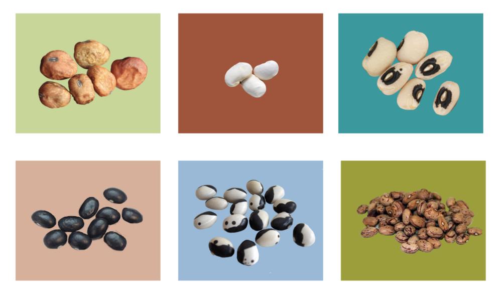 BONEN WEBSHOP - Het grootste en lekkerste aanbod bonen van heel Nederland!