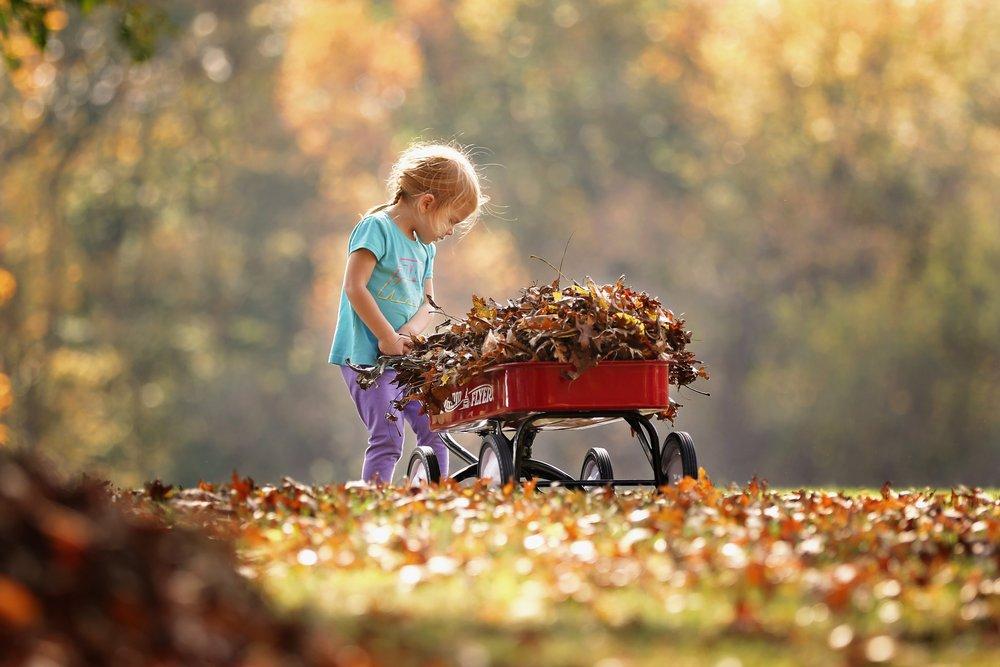 adorable-adult-autumn-leaves-1067191.jpg