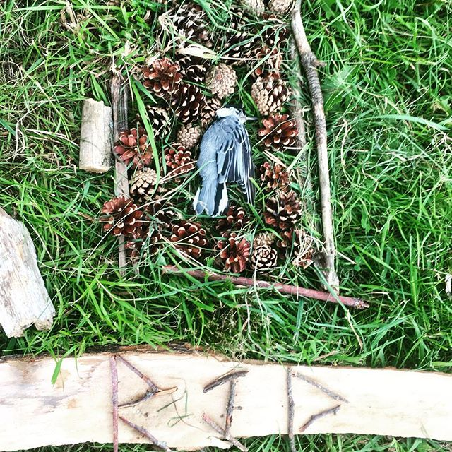 """Bird fly, bird die. Bird fed, bird dead."" The short eulogy read over the memorial for this little nuthatch, poem and memorial decorations by a group of 7&8 year olds. #earlychildhoodeducation #northshorema #outdooreducation #forestschool #circleoflife #birdnerd"