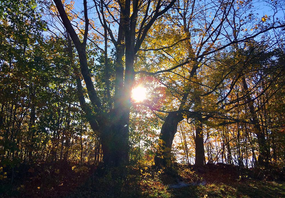 tree-with-sun.jpg