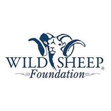 WIld Sheep.jpg