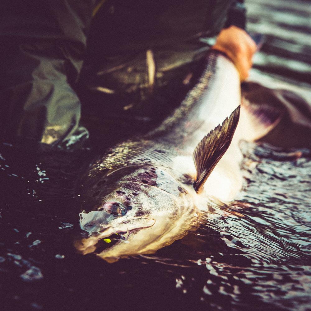 Stiftelsen tillgodoser sitt ändamål genom att ge bidrag till organisationer som arbetar med fiskeförvaltning och fiskevård i Östersjön och dess vattendrag...