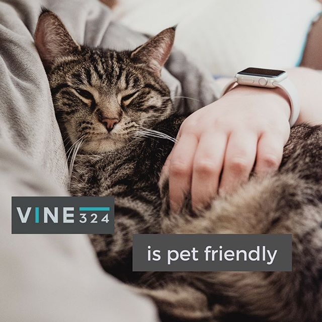 Bring your fur baby home to stay at Vine 324! Call us TODAY to learn about our pet policy, and find out how both you and your best friend can call Vine 324 home. #vine324 #lifeonvinestreet #chattanooga #downtownchattanooga #offcampushousing