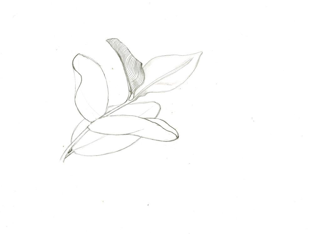 Jay_Sketch_3.jpg