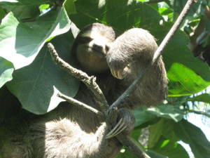 sloth_7.jpg