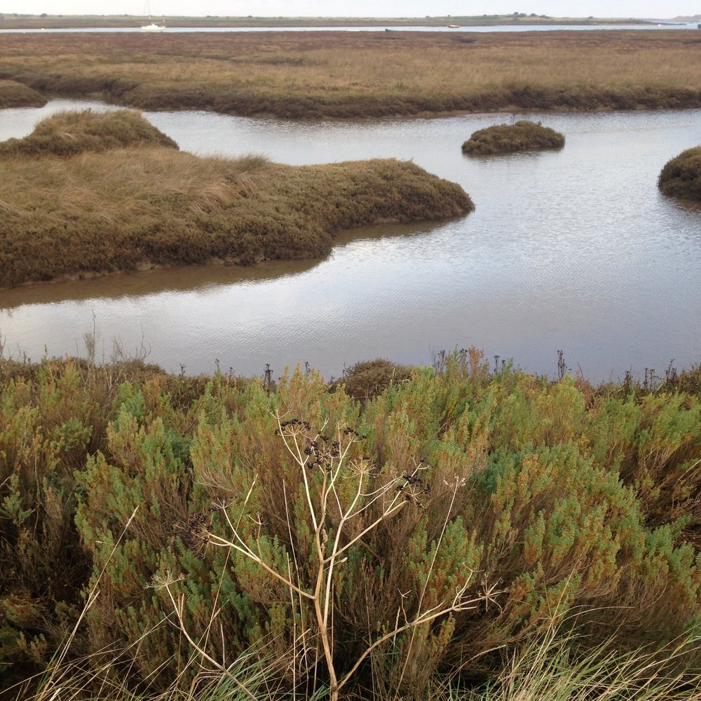 salt marshes in Brancaster Staithe, Norfolk