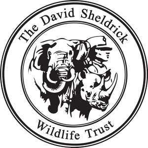 DSWT_logo_vector_black and white.png