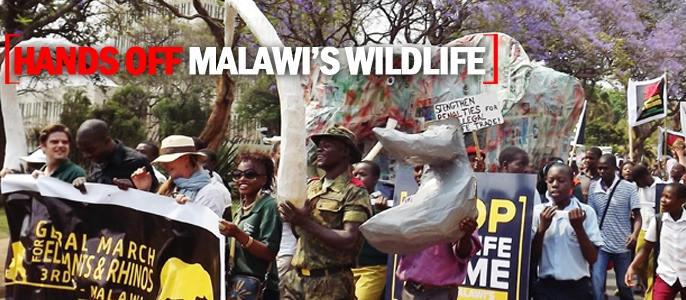Malawi launches illegal wildlife trade review - May 2015