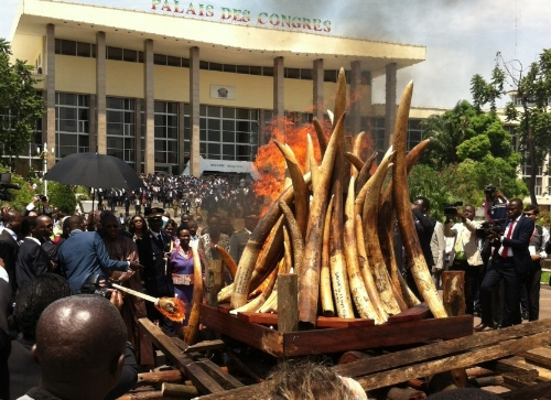 Congo burns ivory & tackles illegal trade - April 2015