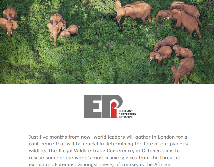 EPI Newsletter: May 2018 - The first of the EPI's monthly newsletter's, includes who we are, our mission, and our plans for October's Illegal Wildlife Trade Conference...