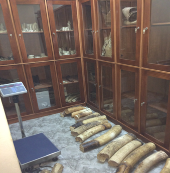 Ivory Store of the Wildlife and Hunting Services.png