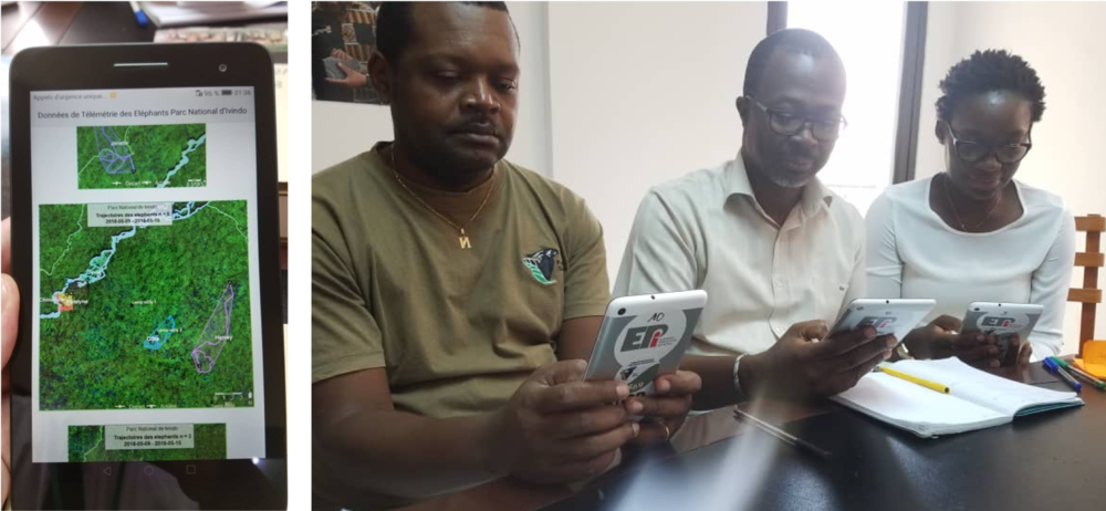 National Park staff in Gabon use EPI tablets to track the movements of elephants through the forests of Ivindo National Park.   June 2018