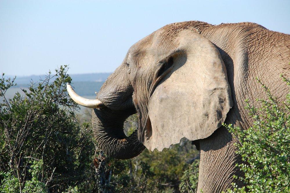 elephant view.jpg