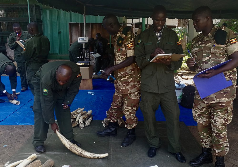 The ivory inventory protocol and the SMS in operation in Uganda