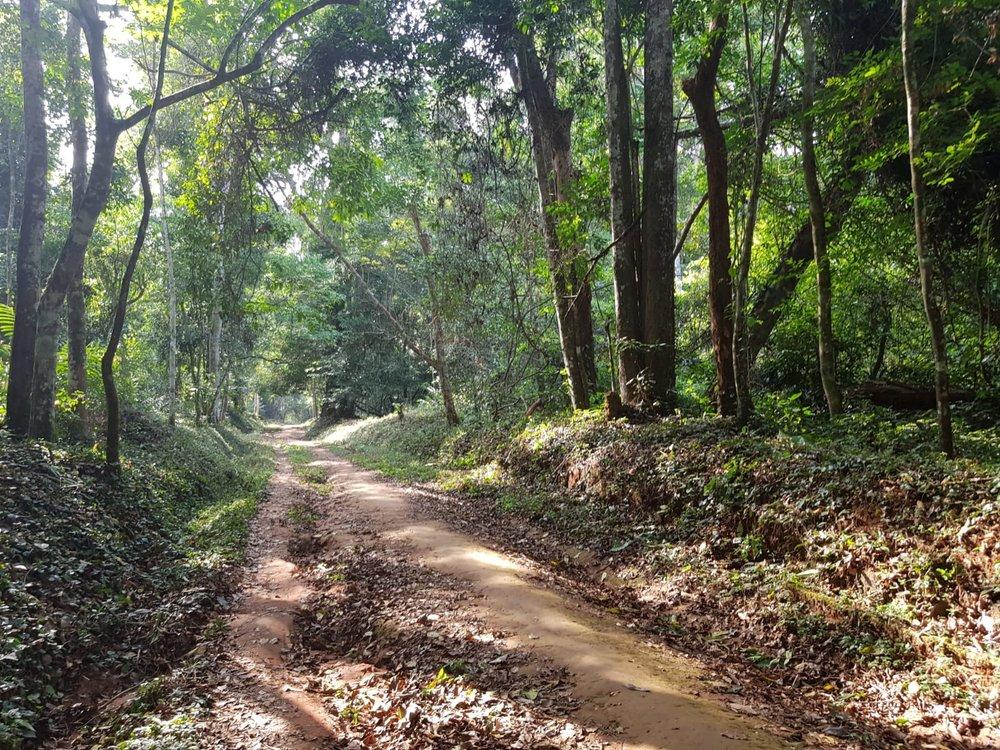 Okomu Forest