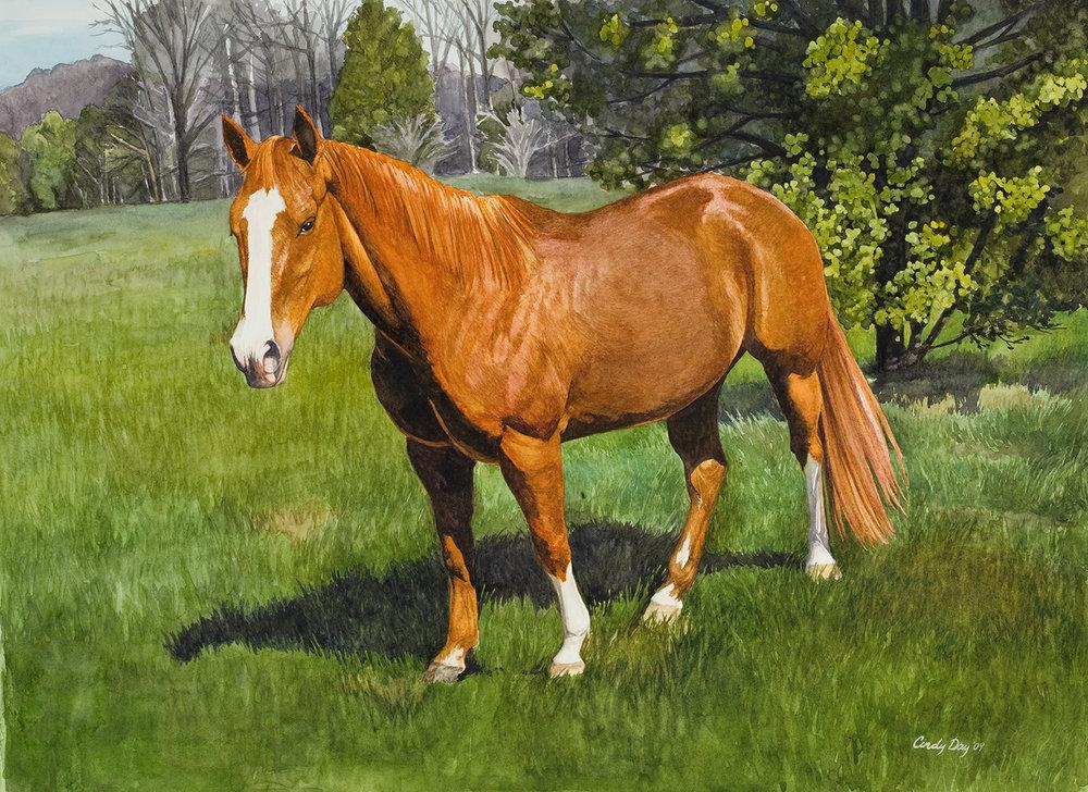 Ceasar 12 x 16 Watercolor