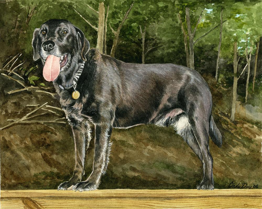 Otis 8 x 10 Watercolor