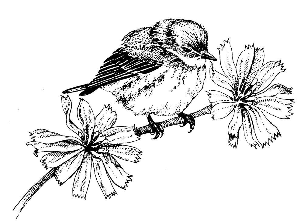 Bird on Chicory