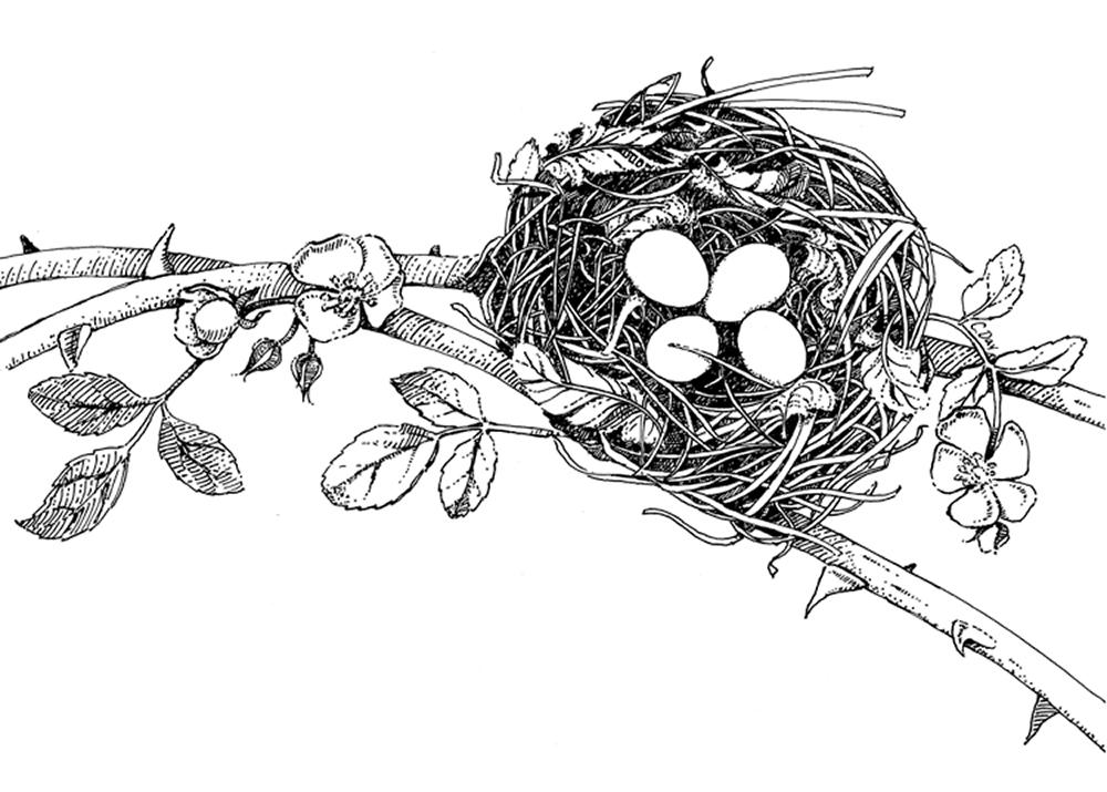 Rosebuds and Robin's Eggs
