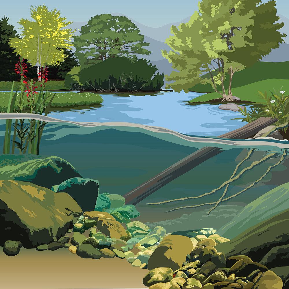Lake Life Illustration