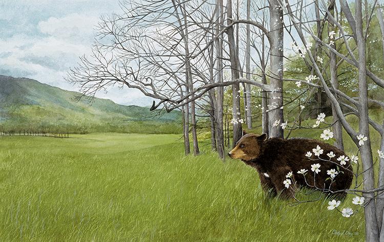 DogwoodBear2_12 x 7.5 crop.jpg