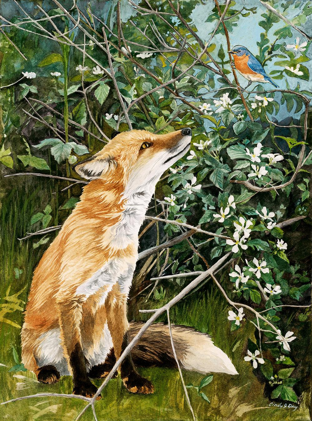 Fox and Bluebird