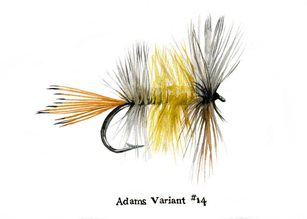 Adams Varient #14