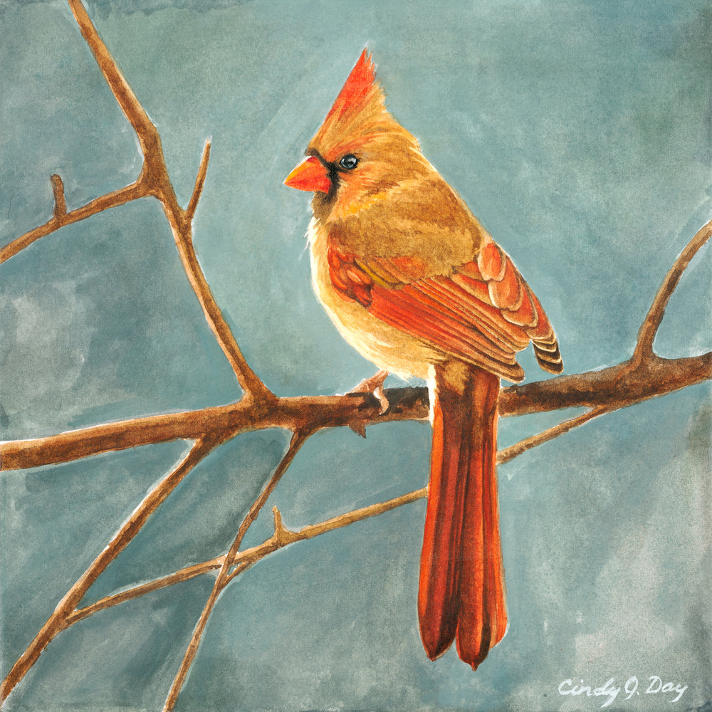 Cardinal on a Winter Branch
