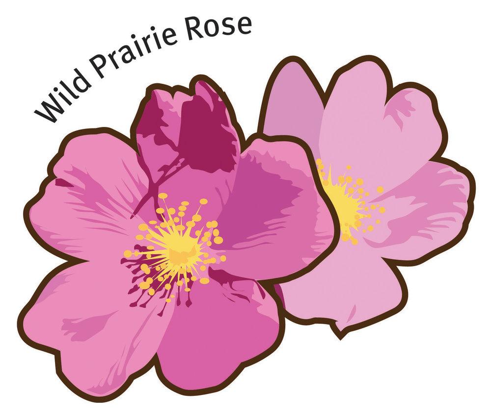 Wild+Prarie+Rose.jpg