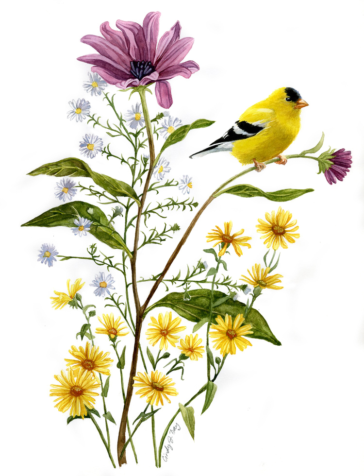 Goldfinch with Gold and Purple