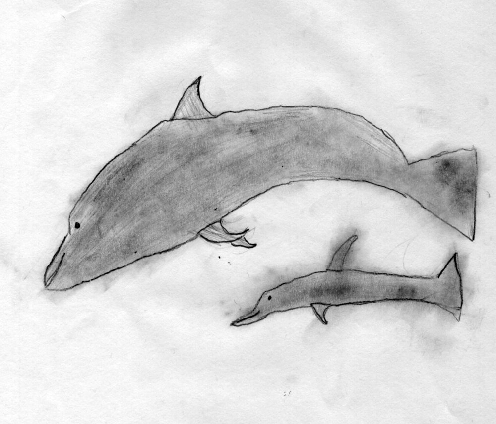 Dolphins kids pencil drawing