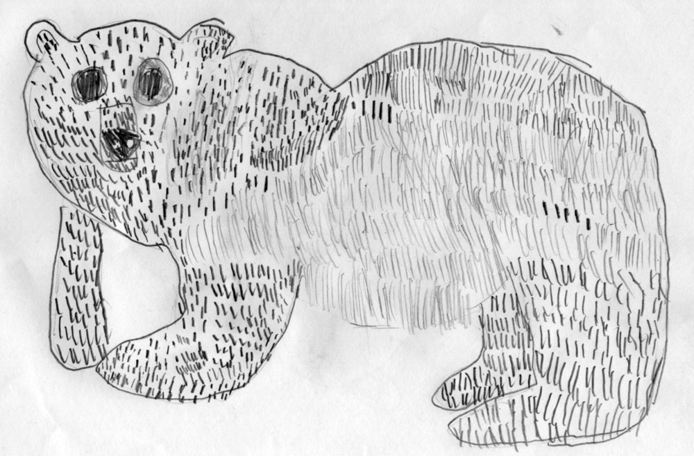 Polar Bear ks2 pencil drawing