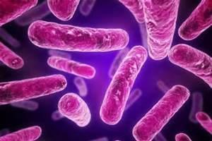 Lactobacillus-Rhamnosus.jpg