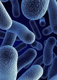 bacteria.jpeg