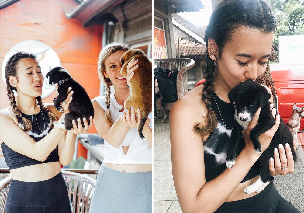 Barc 4 Bali dogs