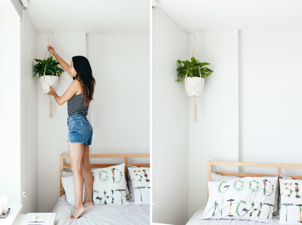 work from home space - hanging plants