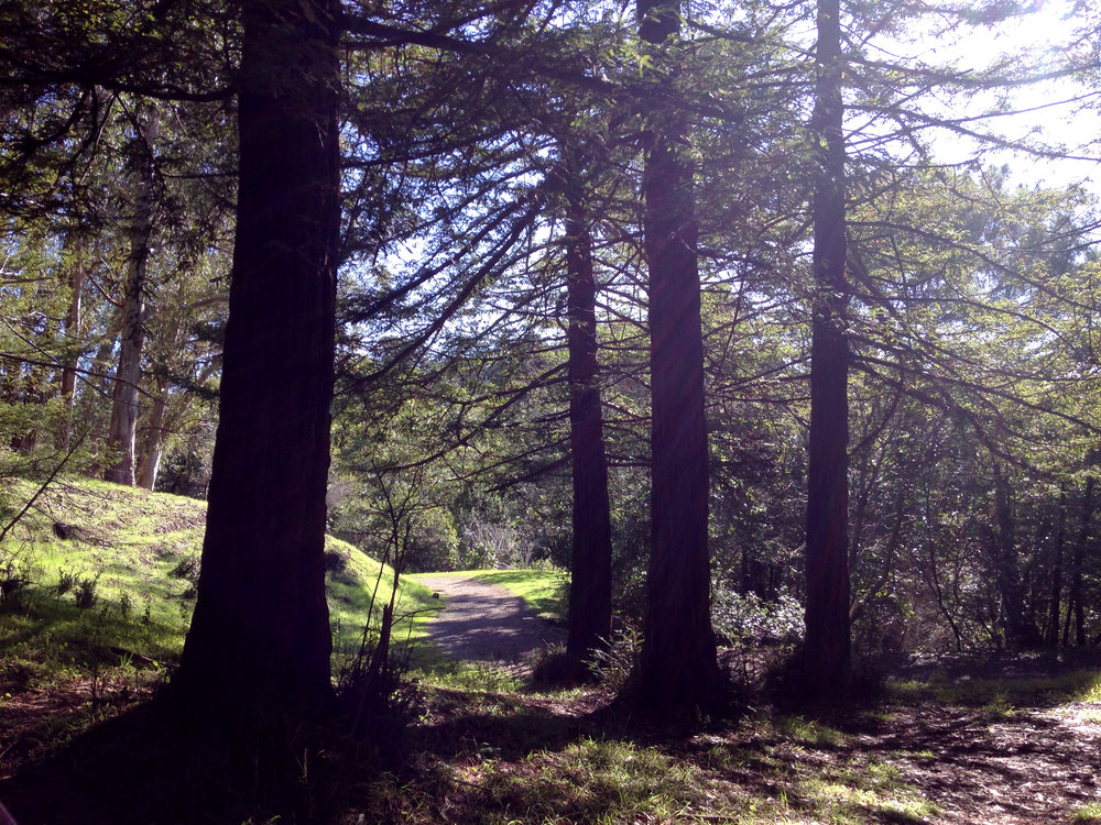 AlvaradoRedwoods2.jpg