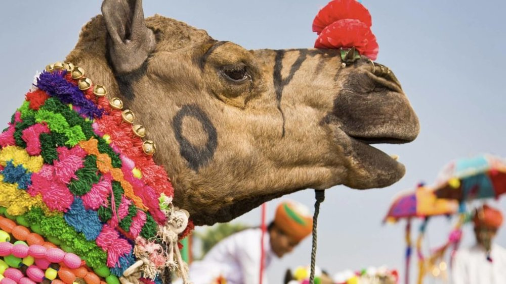 Camel-in-pushkar-on-a-festival-in-india-1024x576.jpg