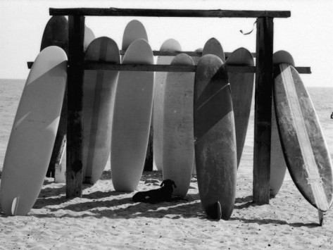 allan-grant-dog-seeking-shade-under-rack-of-surfboards-at-san-onofre-state-beach copy.jpg