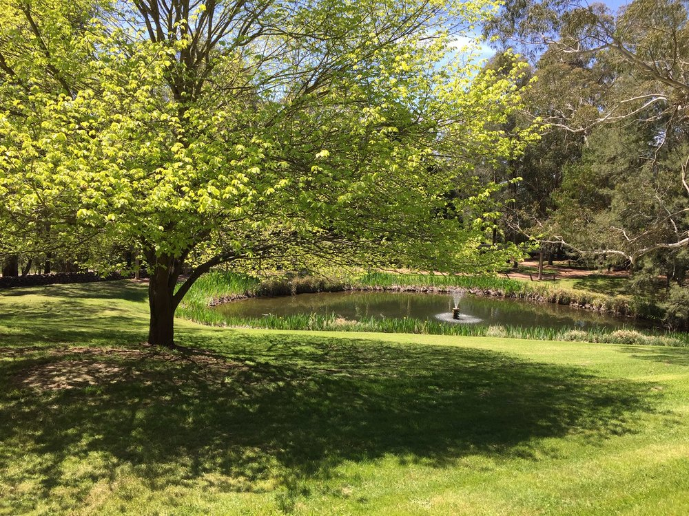 Newly-established garden 'Greenbrier Park' at Mittagong